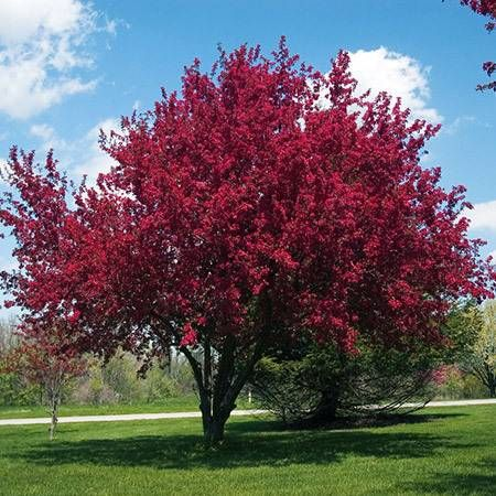 15 Best Favorite Trees For Our Indiana Yard Images On