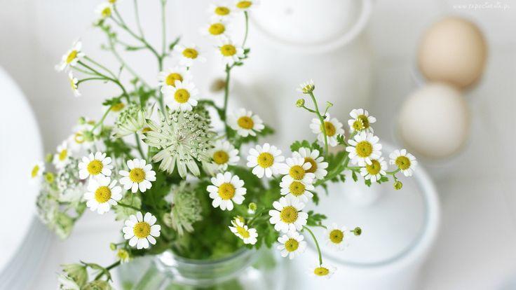 Kwiaty, Bukiet, Rumianek