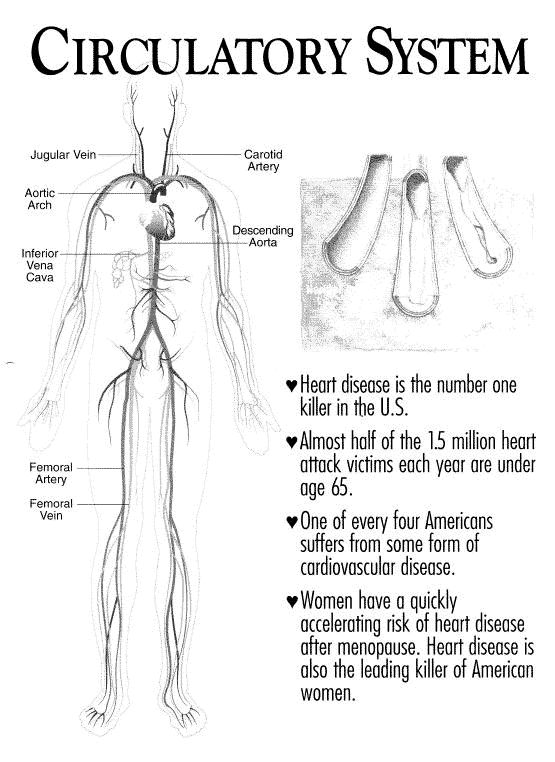 78 Images About Anatomy Physiology On Pinterest