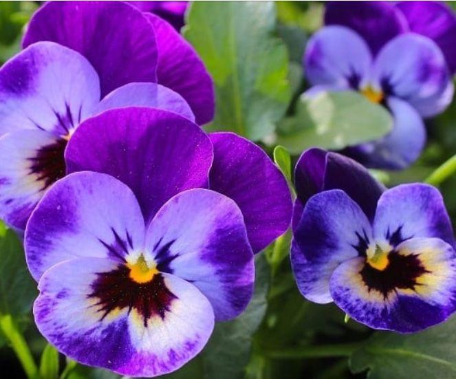 Lila Johnson Tarafindan Flowers Panosundaki Kardes Bitkiler Yontemi Goruntusu Sonbahar Bahcesi