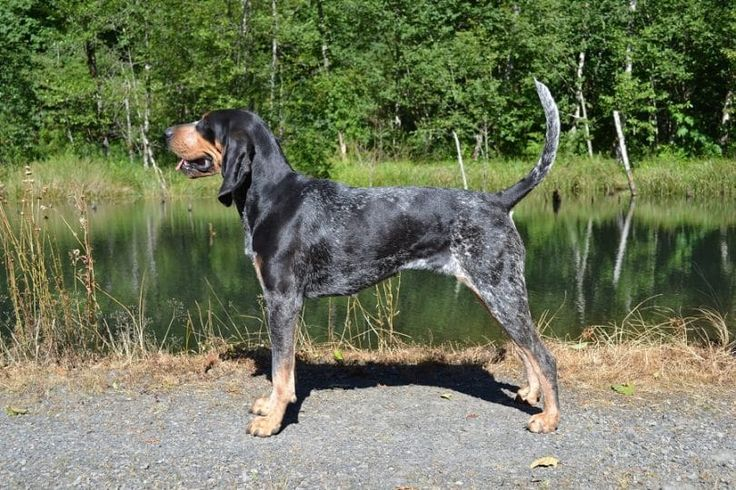 Squirrel Hunting Dogs: 10 Most Popular Breeds