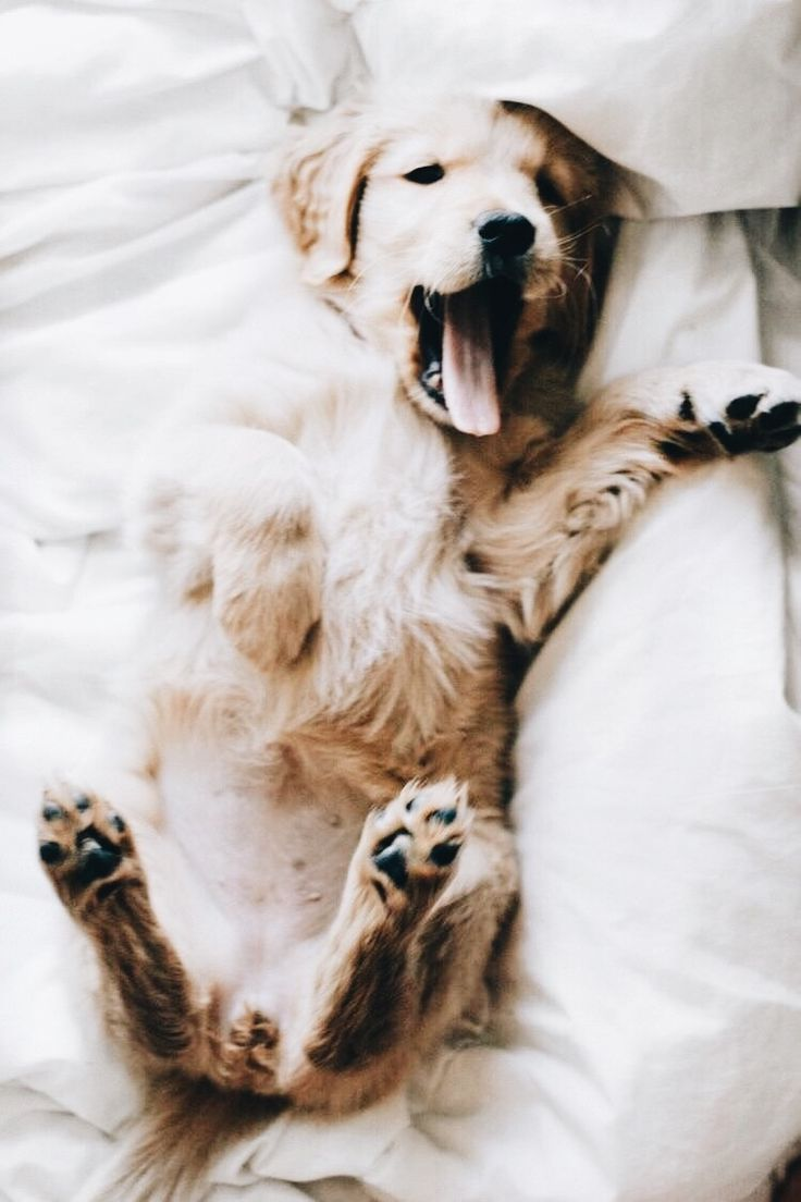 best cute doggos images on pinterest cute dogs fluffy pets and