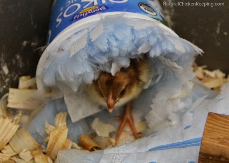 Line a small plastic container with a Swiffer duster refill and glue it in place.  Chicks love this fluffy place to hide!