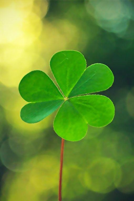 GreenYES‼ I Lenda VL Am the March 2017 Lotto Jackpot Winner❣000 4 3 13 7 11:11 22Universe Please Help Me, Thank You I AM GRATEFUL❣
