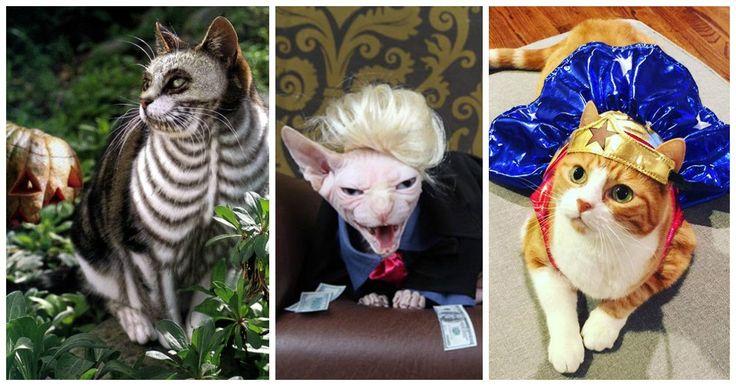 Al igual que nosotros, nuestras mascotas pueden celebrar el Halloween al vestirse de alguna manera especial para las fiestas de noche de brujas. Incluso pueden formar parte de un disfráz en conjunto con el tuyo, ya sea que se convierta en el cangrejo sebastián cuando tu eres la Sirenita o en un Minion cuando tu te disfrazas de Gru, sólo por dar algunos ejemplos.