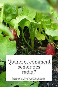 Quand et comment semer des radis ?   http://jardiner-potager.com