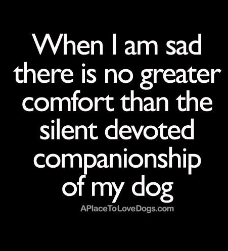 When I am sad there is no greater comfort than the silent devoted companionship of my dog.