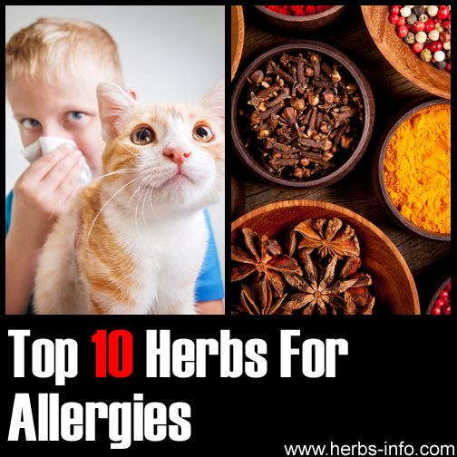 10 Herbal Remedies for Allergies - detailed list with research, references and background info.
