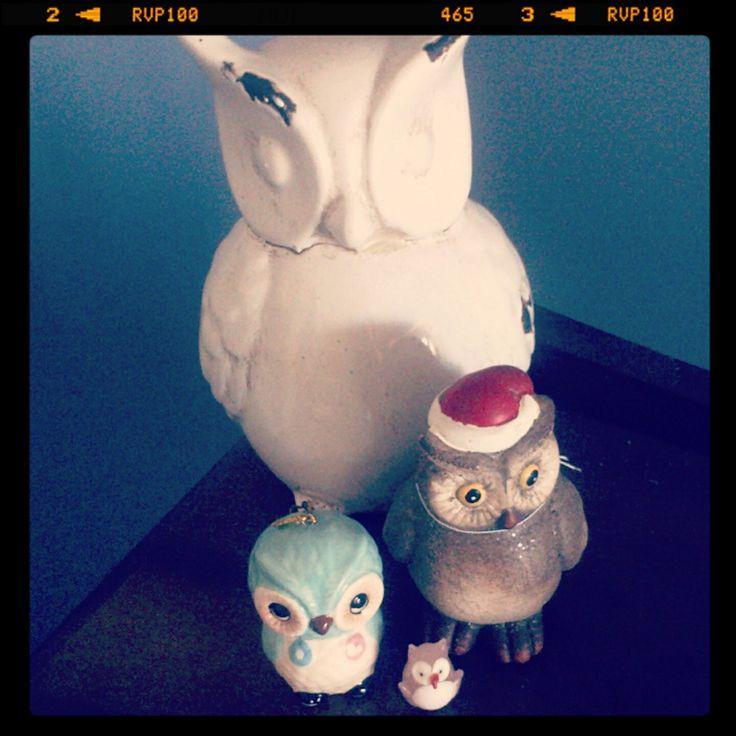 #100happydays my owl collection