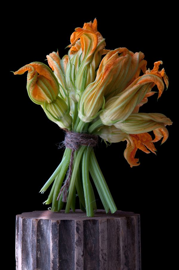 Squash-Blossoms...Lynn Karlin.  I think I would love to have this photo and some others she did.