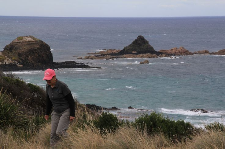 On the walking track between Pyramid Rock and Berrys Beach, Phillip Island
