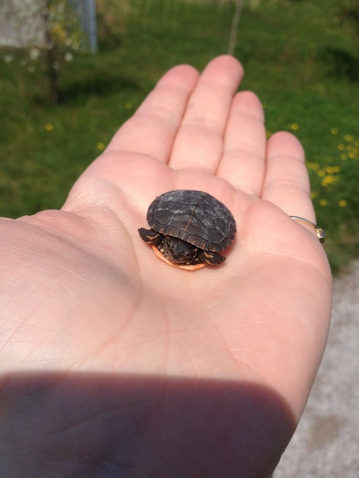 Met a new friend at the Suncor Nature Trail in Sarnia