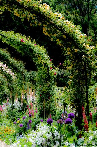 Pergola in the famous garden of Claude Monet in Giverny, France. Photo by christian_lemale on Flickr.