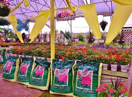 96 Best Burpee Home Gardens Images On Pinterest