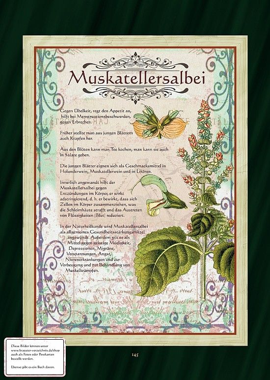 Muskatellersalbei