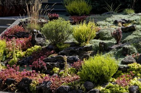 the top california drought tolerant plants valleycrest takes on gardening pinterest. Black Bedroom Furniture Sets. Home Design Ideas