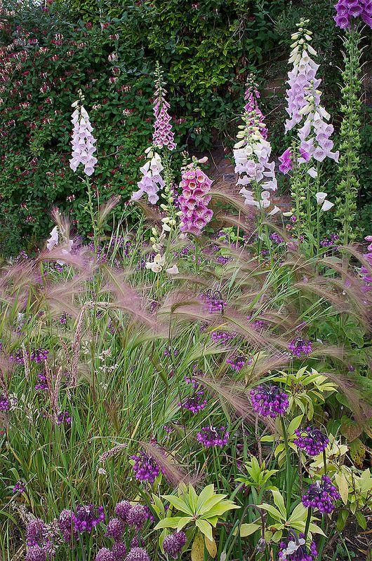 Cottage-style Flower Borders at Stockwood Park Gardens, Bedfordshire, UK   English Flower Borders (32 of 50)