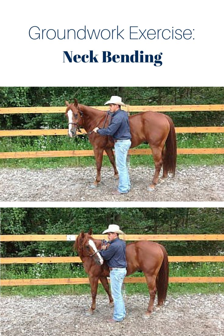 relationship building exercises for you and your horse to improve groundwork Lungeing/groundwork exercises to build up topline it encourages the horse to work 'long and low' helping to improve top line you could she is building.