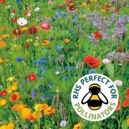 Annual And Perennial Mixed Wildflower | 1 Metre Seed Carpet | Simple Sowing
