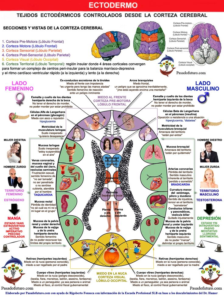 TAC Corteza Cerebral Organos Nueva Medicina Hamer 3ra Ley Biologica Sistema Ontogenetico