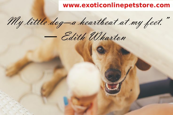 """My little dog-a heart at my feet."" - Edith Wharton  #edithwharton #heartbeat #dogs http://www.exoticonlinepetstore.com/"