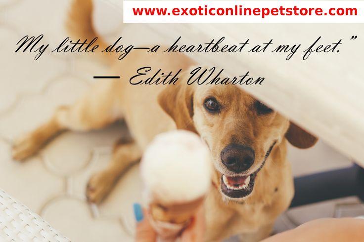 """My little dog-a heart at my feet."" - Edith Wharton  #edithwharton #heartbeat #dogs http://www.exoticonlinepetstore.com/"
