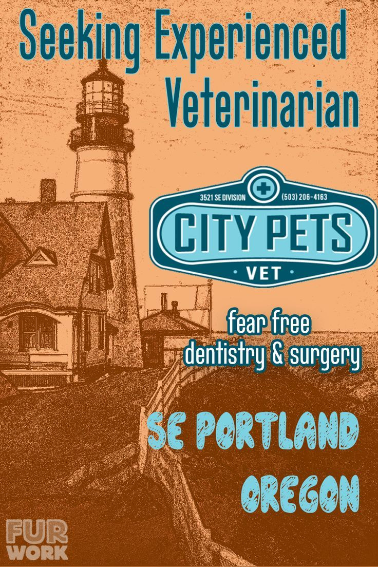 Associate Veterinarian City Pets Vet Portland Or Oregon Usa