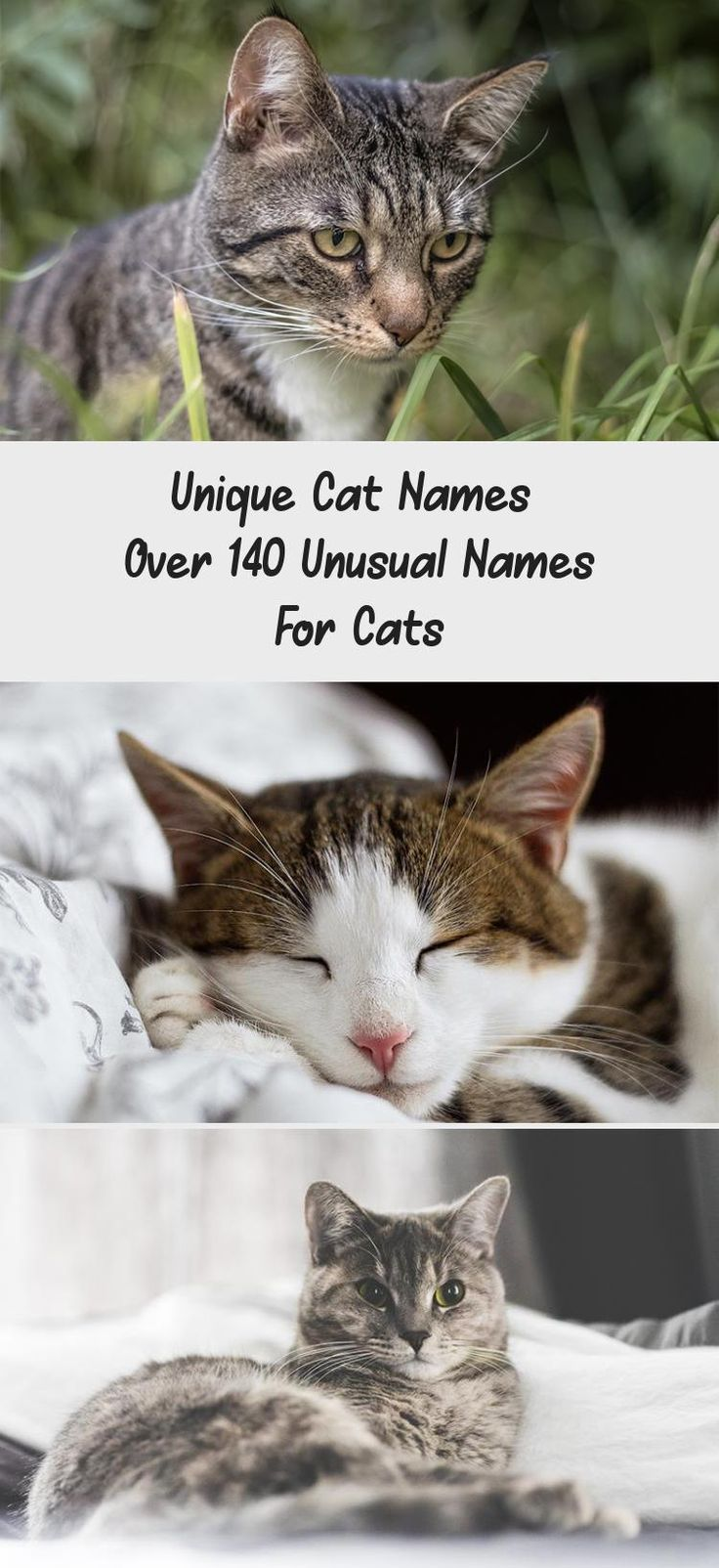 Unique Cat Names Over 140 Unusual Names For in 2020