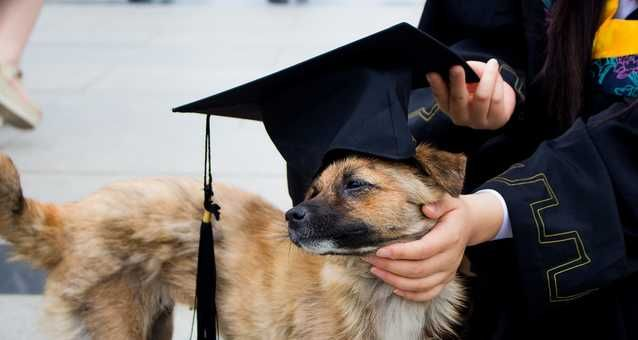You Can Attend A Florida Police Dog In Training Graduation