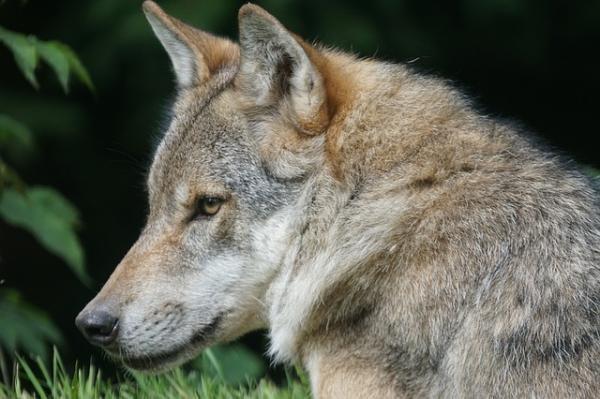 32 Animales En Peligro De Extinción En España Nombres Y Fotos Animales En Peligro De Extincion En Peligro De Extincion Fotos De Los Animales