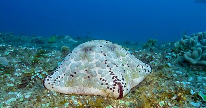 The pristine reefs of Rocktail's Maputaland Coastal Reserve in iSimangaliso Wetland Park are a treasure trove of dive delights...