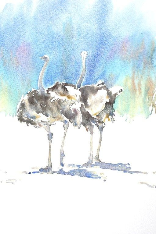 Ostriches Pair by Julia Cassels
