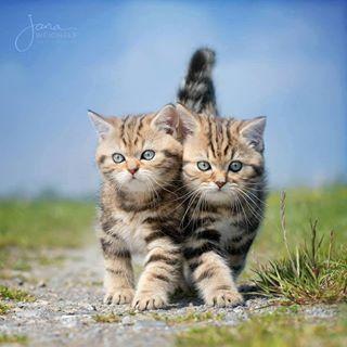 Fatti i Cats tuoi