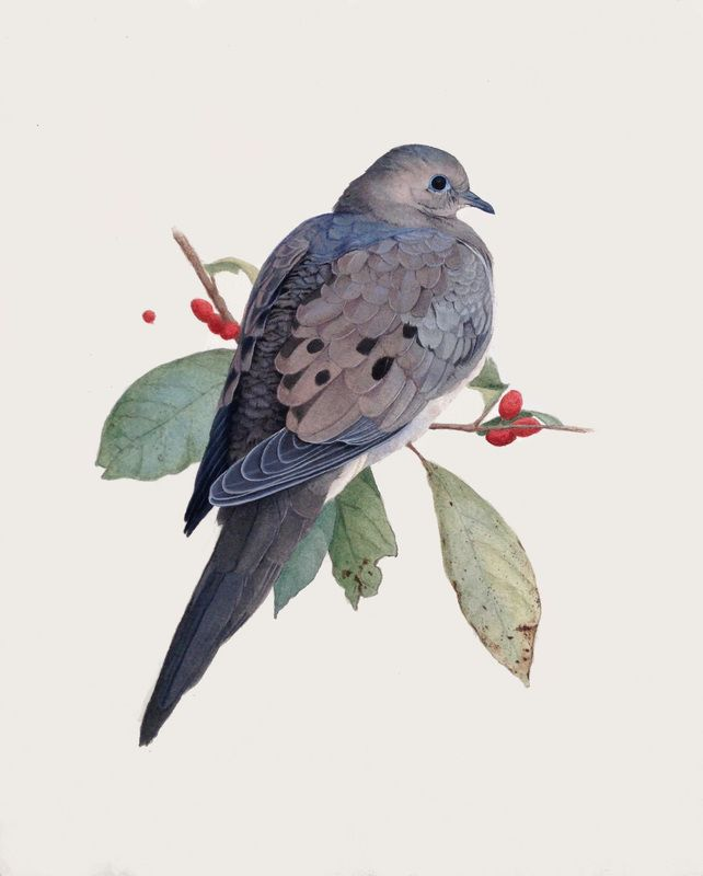 Portfolio - Alex Warnick- Natural history artist specializing in bird illustration. I just bought this!