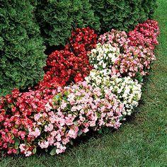 Цветы для клумбы цветущие все лето низкорослые | Частный Дом