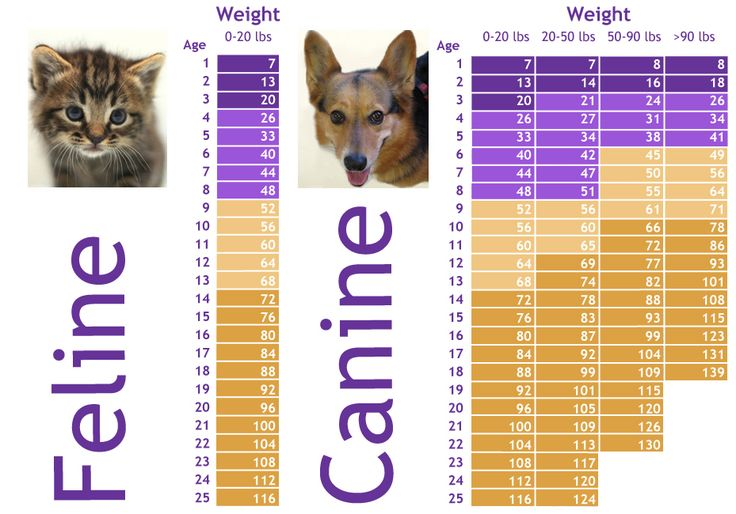 How old is my pet REALLY? Dog teeth, Dog teeth cleaning
