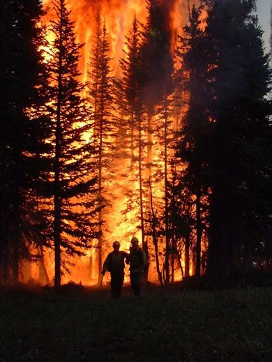 Smoke Jumpers confronting a vicious forest fire.