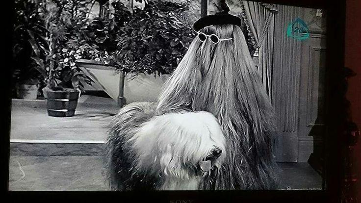 Old English Sheepdog on The Addams Family TV show, circa ...