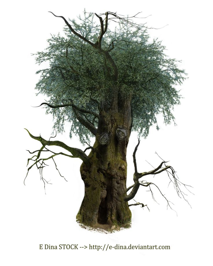 Hq Png Stock Tree Man Tree Mystical Forest Spooky Trees