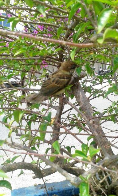Baby bird ♡
