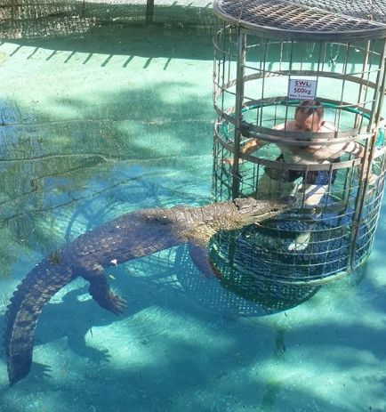 Go Crocodile cage diving