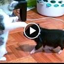 Try NOT TO LAUGH and KEEP A STRAIGHT FACE challenge - Super FUNNY ANIMAL compilation