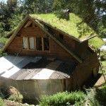 6 sencillos pasos para hacer un techo verde.