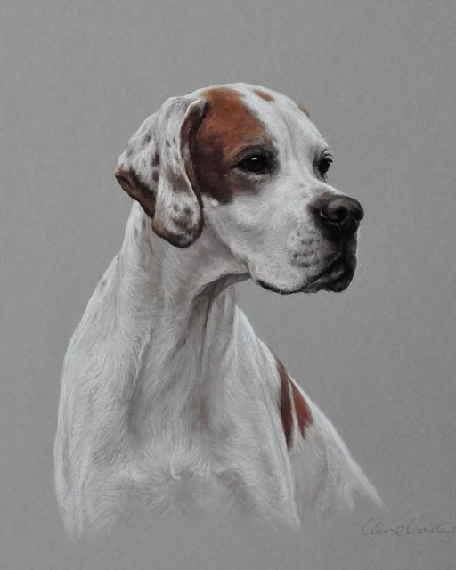 English Pointer by Claire Verity http://www.turmericfordogs.com/blog
