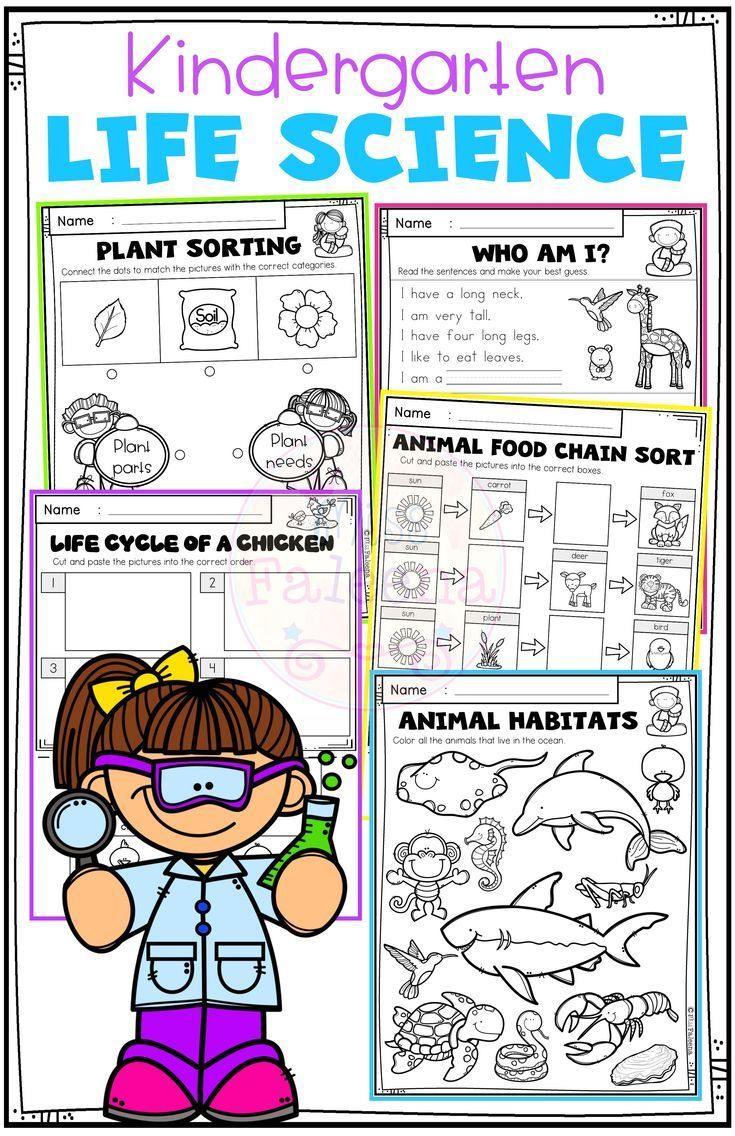hight resolution of There are 38 pages of worksheets and 11 pages of posters in this  kindergarten life science re…   Kindergarten science