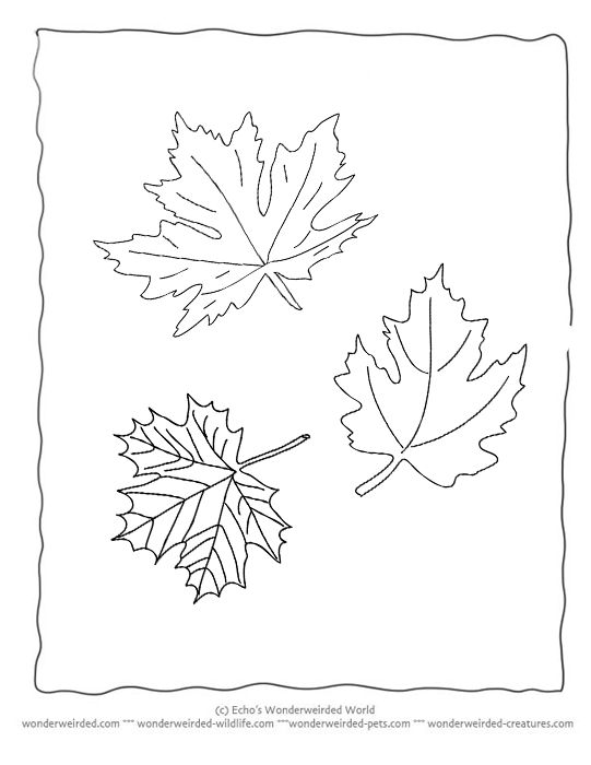 Best Templates Images On   Leaf Template Maple