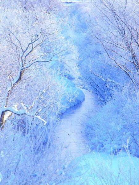 風景・自然の投稿写真。タイトルは冬色彩々