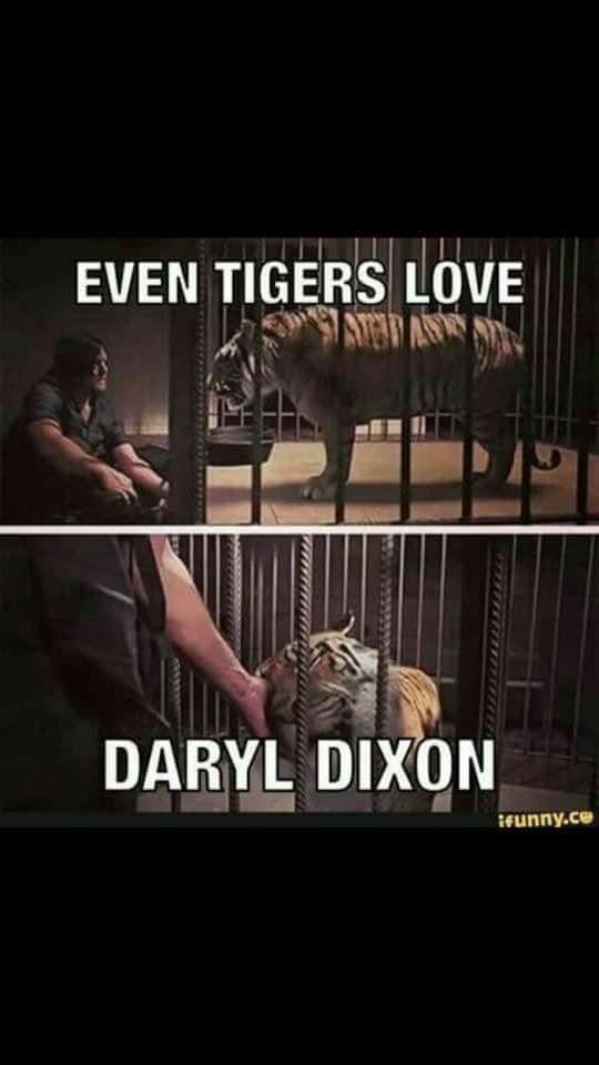 Evan tigers love Daryl Dixon  - TWD