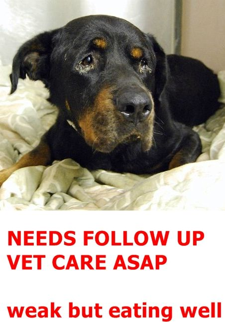 SUPER URGENT Manhattan Center DARWIN – A1079264  **NEEDS FOLLOW UP VET CARE ASAP**  MALE, BLACK / RED, ROTTWEILER MIX, 5 yrs STRAY – STRAY WAIT, NO HOLD Reason STRAY Intake condition INJ MINOR Intake Date06/29/2016 http://nycdogs.urgentpodr.org/darwin-a1079264/
