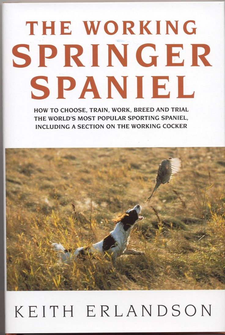 The Working Springer Spaniel by Keith Erlandson | Quiller Publishing. A versatile hunting and retrieving dog, its drive and energy give it an attractive temperament but make it difficult to handle. Erlandson was one of the world's top breeders and handlers of both the working springer spaniel and cocker and describes in this book the knowledge he gained from more than 37 years experience. #dog #springer #cocker #spaniel #training
